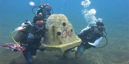 korallenriffe bali